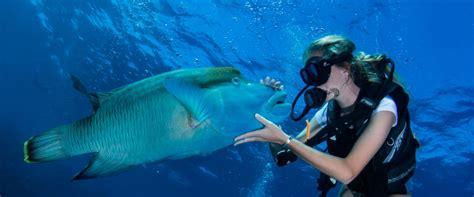 liveaboard snorkeling