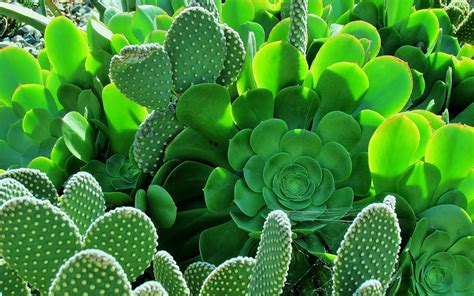 Cactus HD Wallpaper | Background Image | 1920x1200 | ID ...