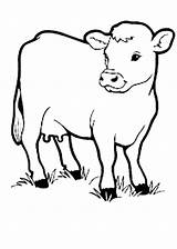 Cow Coloring Pages Animal Printable Drawing Cows Outline Farm Animals Sheep Cartoon Preschool Kidsplaycolor Sheet Drawings Books Anatomy Manga Sheets sketch template