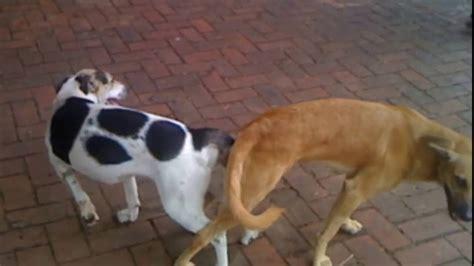 mujer pegada con un perro pareja se quedó pegada tras