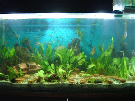 ikan hias tanaman air tawar aquascaping