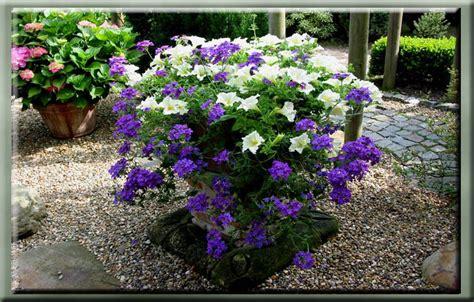 exotische potplanten met bloem g 233 rard s tuin