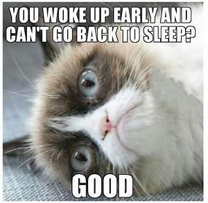 168 best images about Grumpy cat on Pinterest | Grumpy cat ...