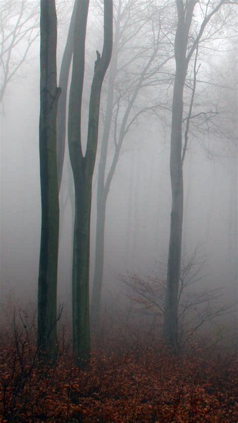 nebel im herbstwald kostenloses handy hintergrundbild