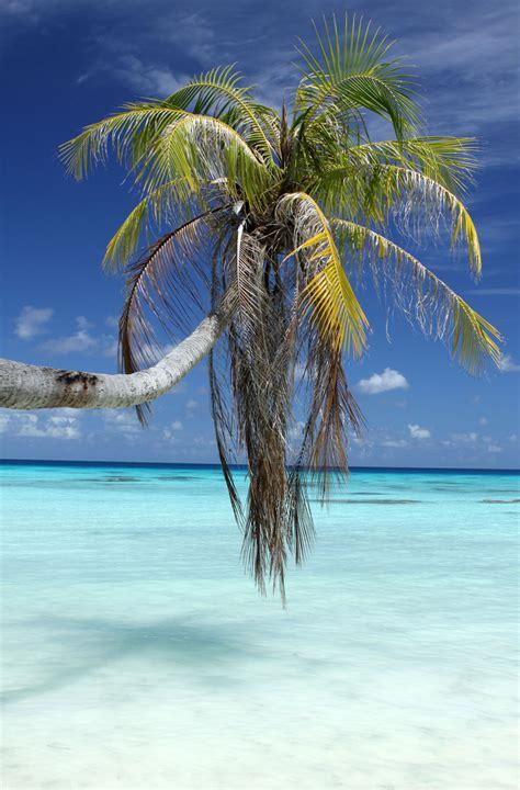 Tahiti | Moorings Ownership