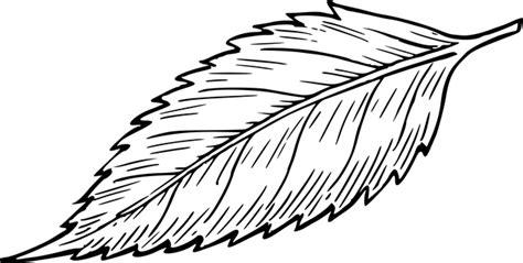 Lehdet Lehti Kasvi · Ilmainen vektorigrafiikka Pixabayssa