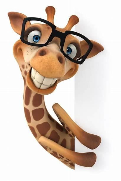 Giraffe Animals Girafa Animal Transparent Material Drawing