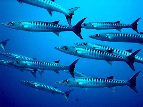 barracuda networks cuda jmp securities   tune benzinga