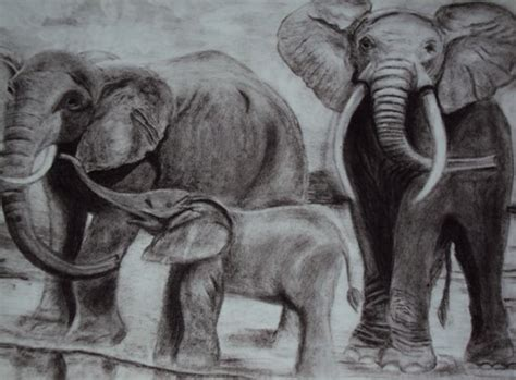 animal paintings  charcoal  paper  sangeeta jain