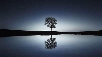 Pexels Reflection Night Tree Lake Nature Calm