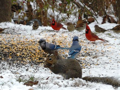 Backyard Animals by Backyard Animals Wildlife In Photography On The Net Forums