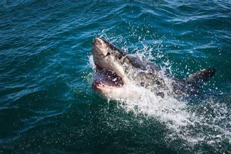 outer banks shark attacks