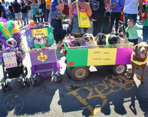 Pug Patrol At The 2017 Mardi Gras Beggin' Pet Parade (part