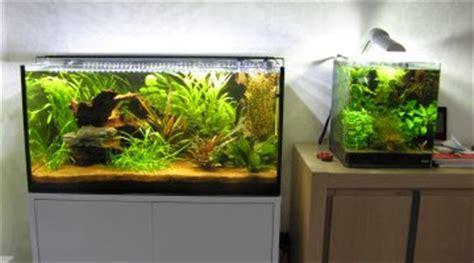 tanganyika ou malawi avec un aquarium de 120 litres