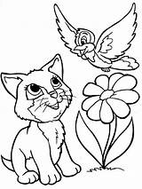 Coloring Cats Pages Animals Printable Cat Breeds sketch template