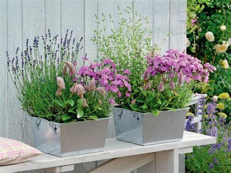 Was Passt Zu Lavendel Im Blumenkasten by Lavendel Pflanzen Balkon Lavendel Auf Dem Balkon