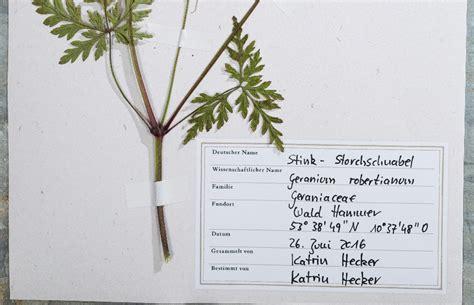 herbarium deckblatt  babiesin sheep sclothing