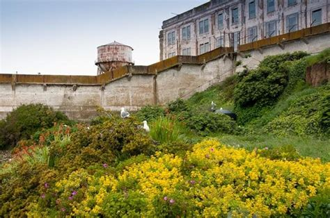 alcatraz gardens make an escape to the gardens of alcatraz garden design