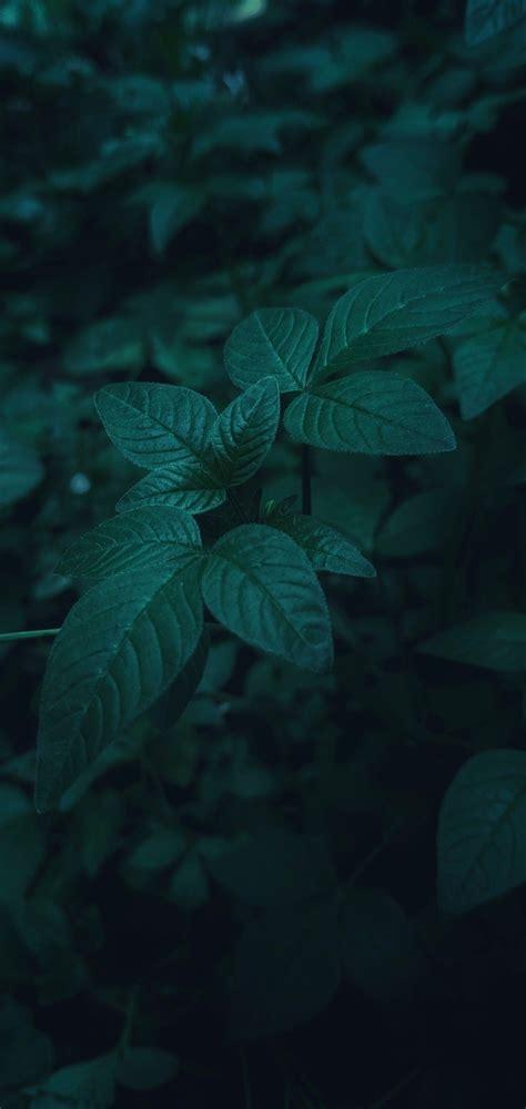 nature green leaves daun hijau wallpaper android ios di