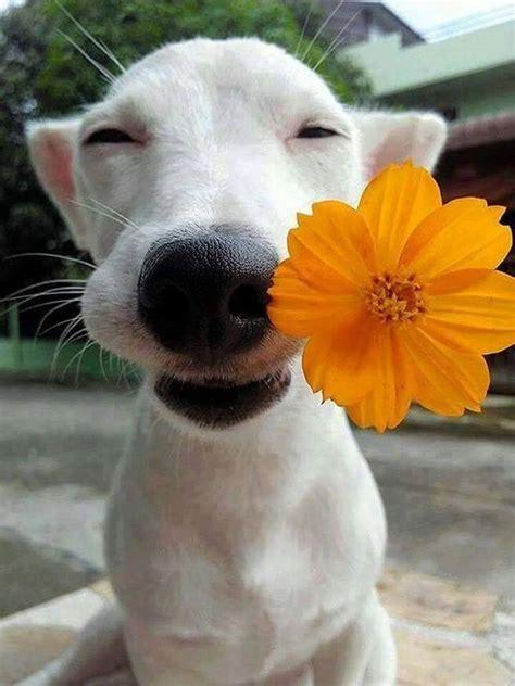 dog   flower   mouth luvbat