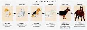 Picture Chart Palisades Appaloosas Equine Fetal Growth Chart