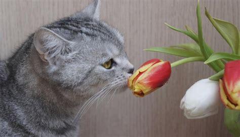 Geranium toxic to cats