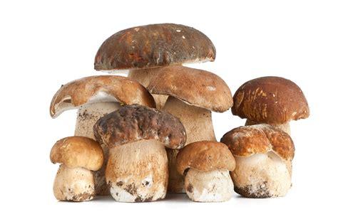 Tipi Di Funghi Da Cucinare by Come Riconoscere E Distinguere I Funghi Porcini