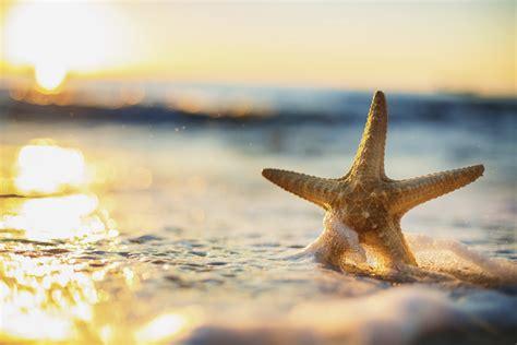 importance  starfish   ocean deepoceanfactscom