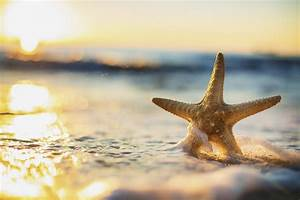 15 Importance Of Starfish In The Ocean