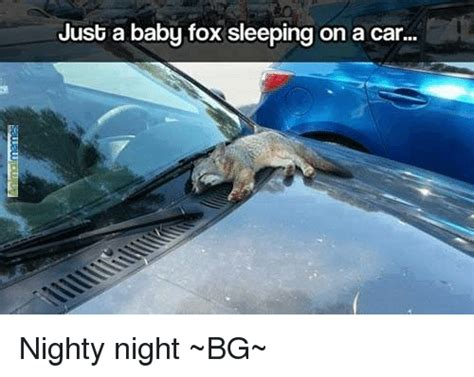 Nighty Night Meme - 25 best memes about baby foxes baby foxes memes