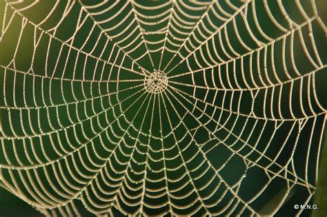 la toile d araignee digne d un grand math 233 maticien