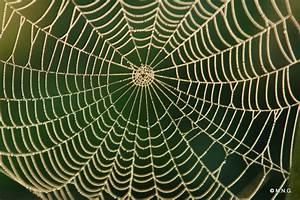 Faire Fuir Les Araignées : comment se d barrasser des araign es la maison sans les tuer journal des bonnes nouvelles ~ Melissatoandfro.com Idées de Décoration