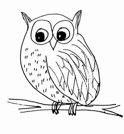 Owl Coloring Sketch Snow Pages Colornimbus Templates