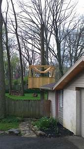 Unique Vine Application - Treehouse Roof - Gardening Forum ...