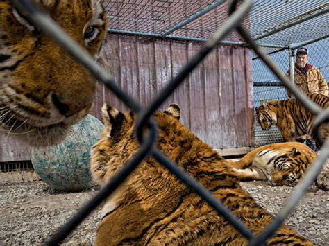 All Categories Exotic Animals Shouldn't Be Pets
