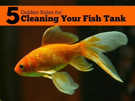 golden rules  cleaning  fish tank pbs pet travel