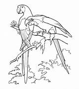Parrot Coloring Pages Printable Realistic Parakeet Cockatoo Animals Toddler Bird Momjunction Animal sketch template
