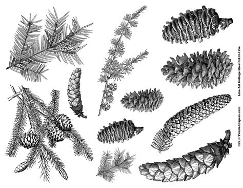 the chew templates pine cones animals pine cone graphic google search side line pinterest