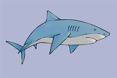 draw  shark animal crafts shark drawing shark cute