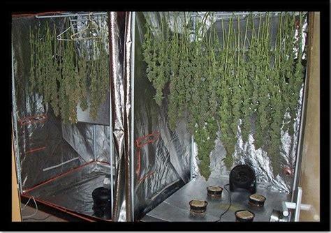 chambre culture cannabis box de culture maison rellik us rellik us