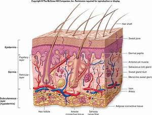 Body Regions      Integumentary System  Dd