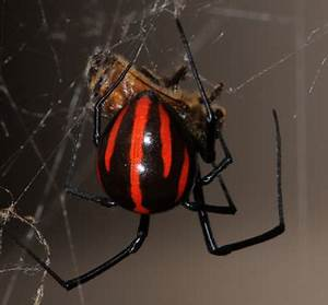 5 Most Deadly Spiders on Earth - XciteFun.net