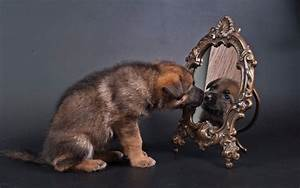 Dog dogs puppy baby puppies mirror reflection s wallpaper ...