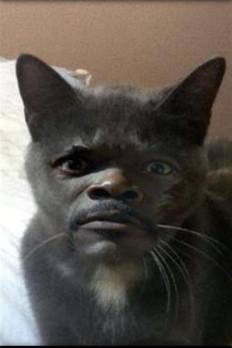 Pussy Cat Meme - i m no pussycat blank template imgflip