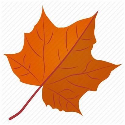Autumn Leaf Fall Icon Maple Foliage Leaves