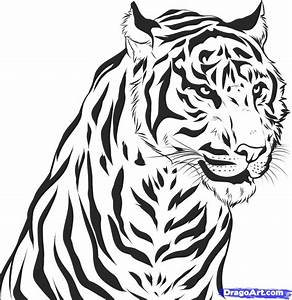 How To Draw Tiger   Step By Step Guide Ud83d Ude0d  U2013 How To Draw