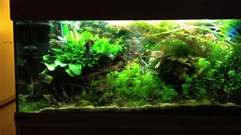 arguments pour convaincre d acheter un aquarium plus grand