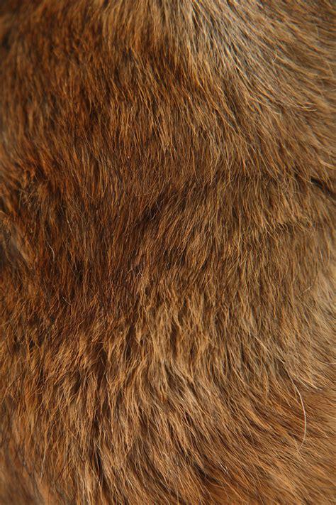 Animal Fur Wallpaper - iphone wallpaper wallpapersafari