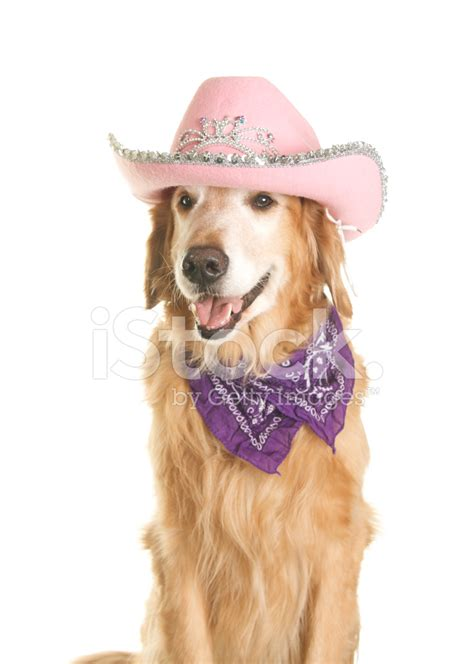 Golden Retriever Dog With Pink Cowboy Hat And Bandana