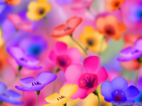 colorful flowers colorful flower wallpapers wallpaper cave